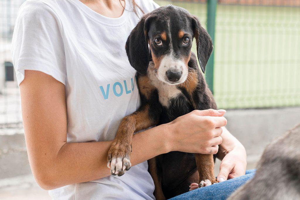 hond adopteren asiel